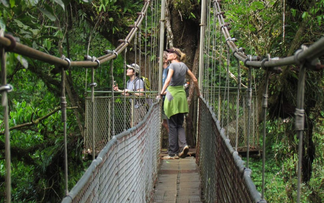 Tenorio Rain Forest Hanging Bridges & Sloth Encounter tour