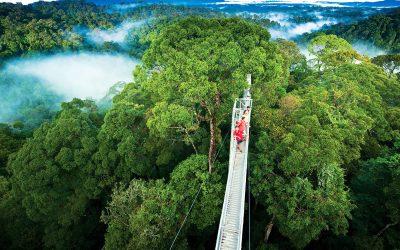 Monte Verde cloud forest combo tour