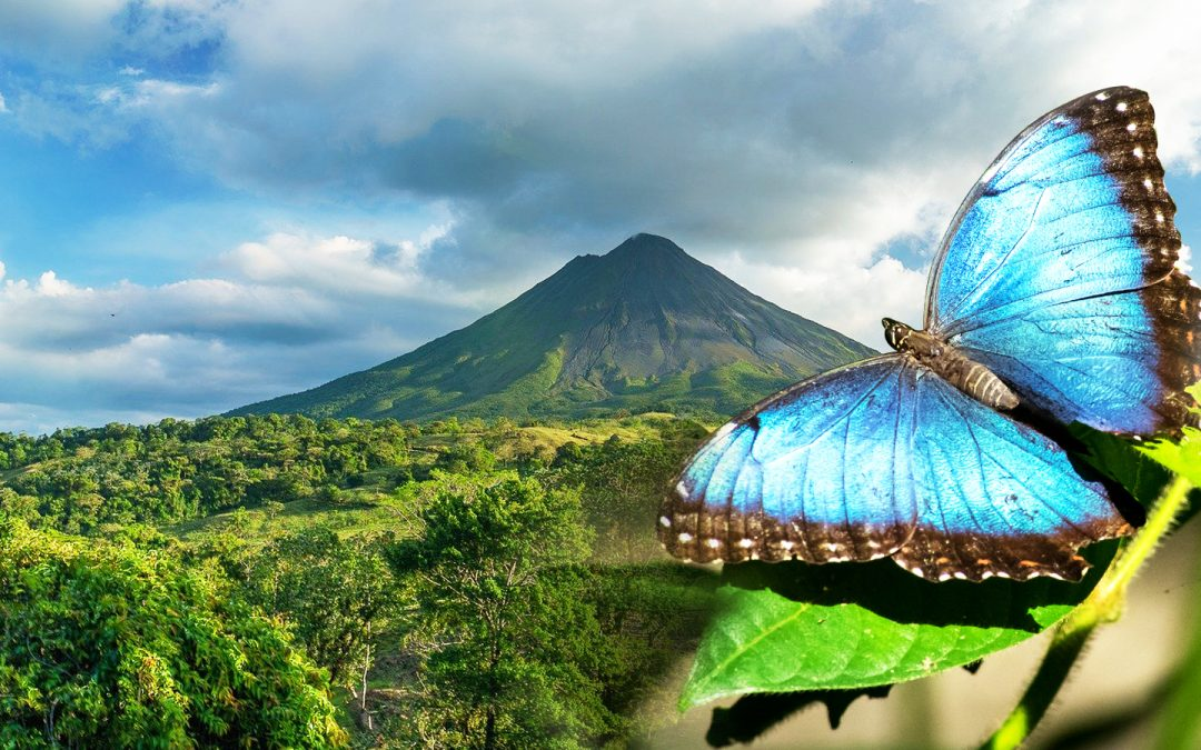 Arenal volcano, hanging bridges and wildlife sanctuary tour